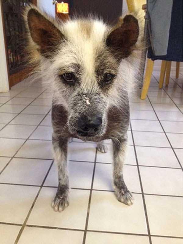 ugliest-dogs (13)