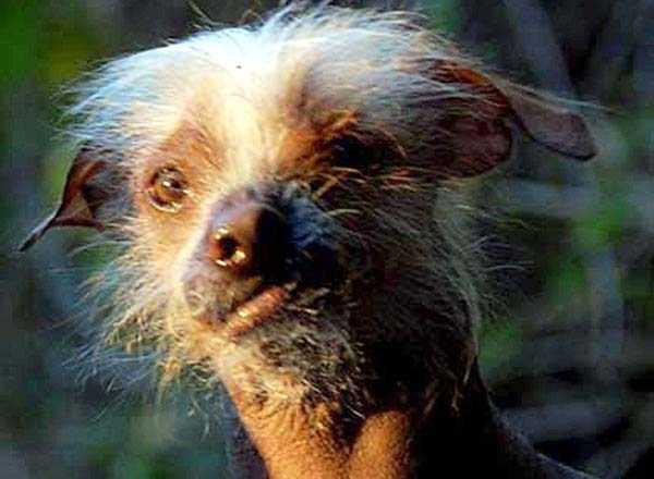 ugliest-dogs (18)