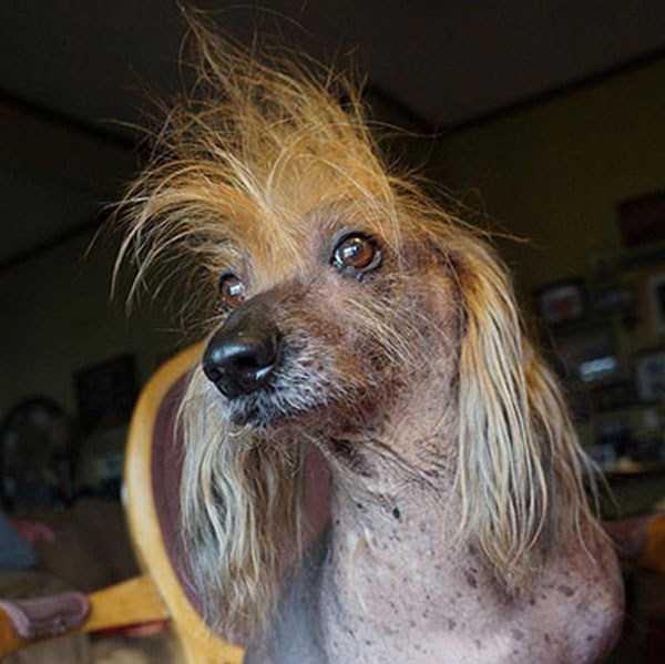 ugliest-dogs (19)