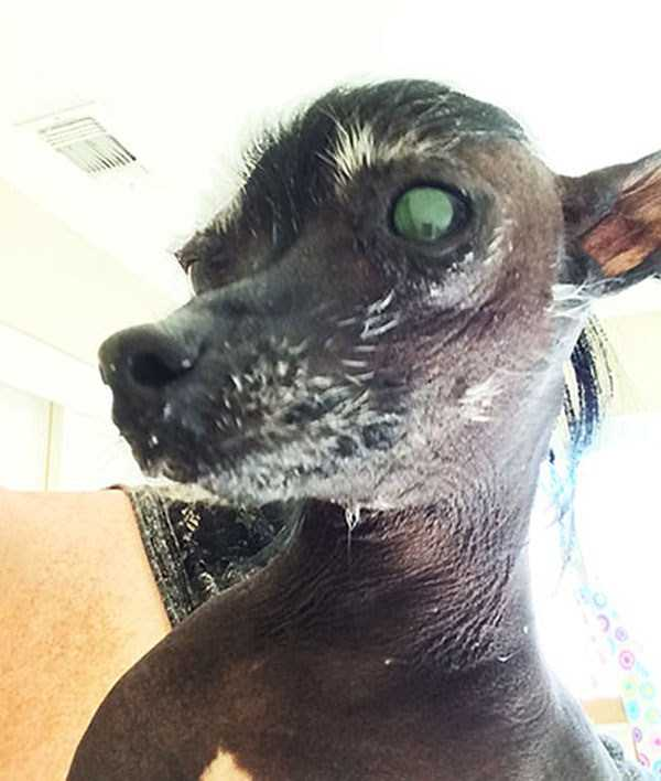 ugliest-dogs (22)