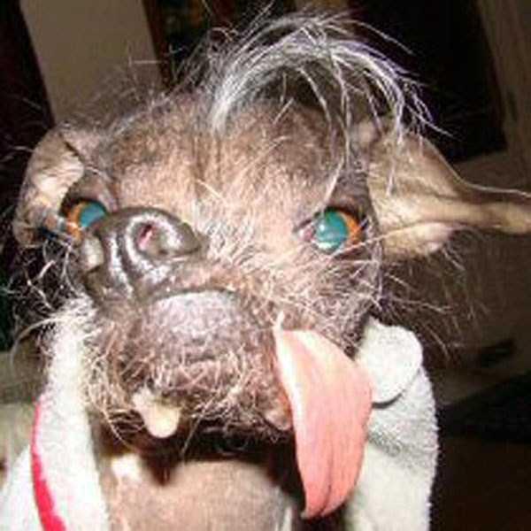 ugliest-dogs (23)