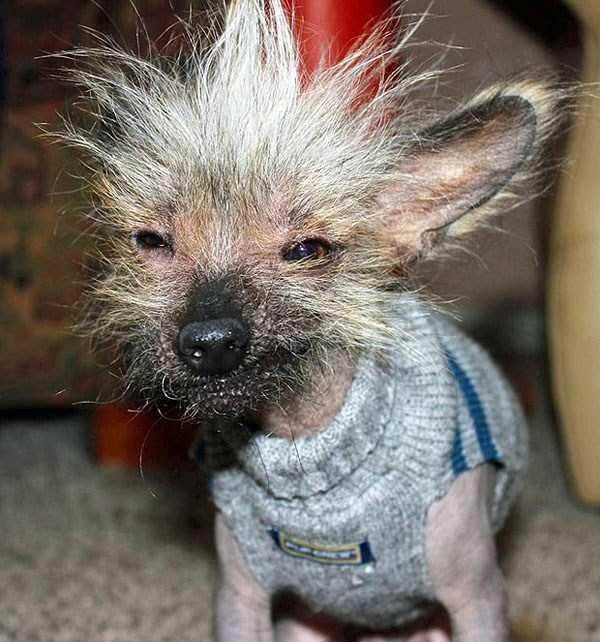 ugliest-dogs (29)