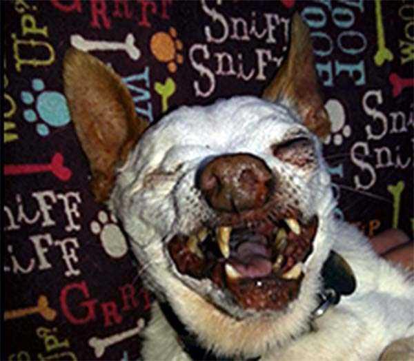 ugliest-dogs (30)
