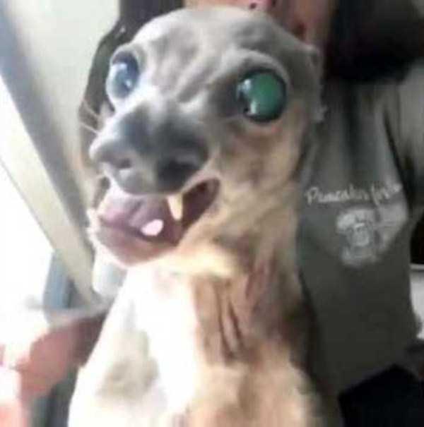 ugliest-dogs (9)
