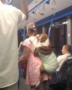 Just Another Normal Day on Public Transportation (40 photos) 25