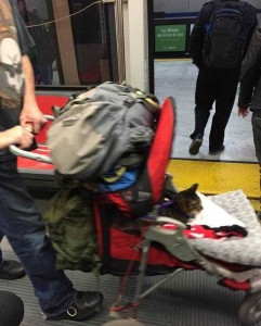 Just Another Normal Day on Public Transportation (40 photos) 8
