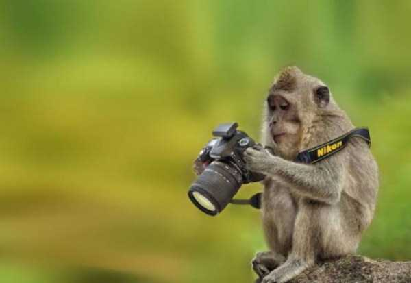 animals-photographers (10)
