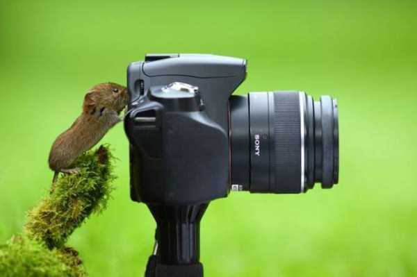 animals-photographers (12)