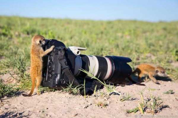 animals-photographers (13)