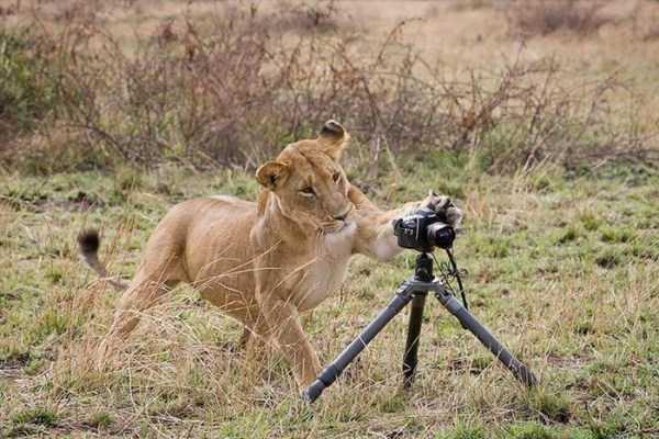 animals-photographers (2)