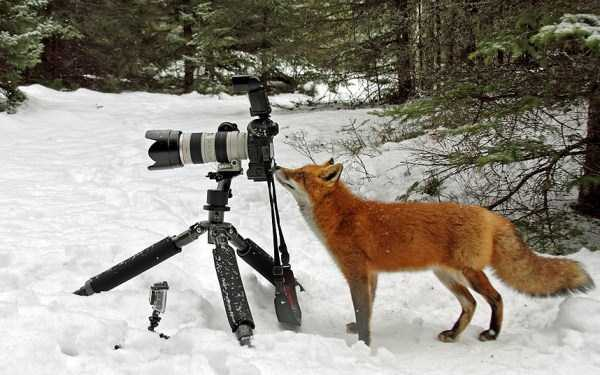 animals-photographers (24)