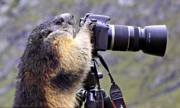 animals-photographers (25)
