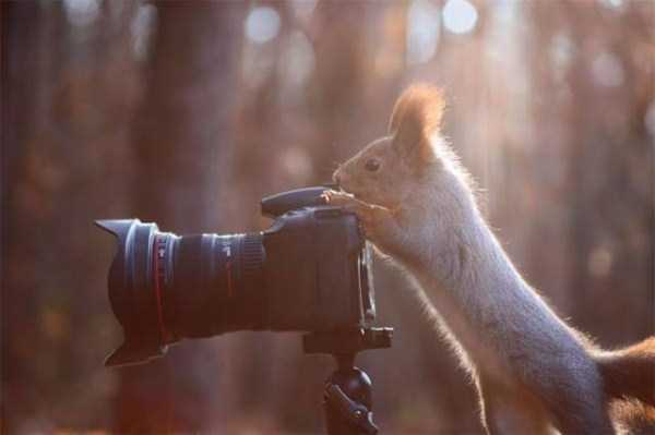 animals-photographers (5)