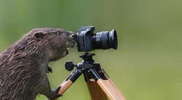 animals-photographers (6)