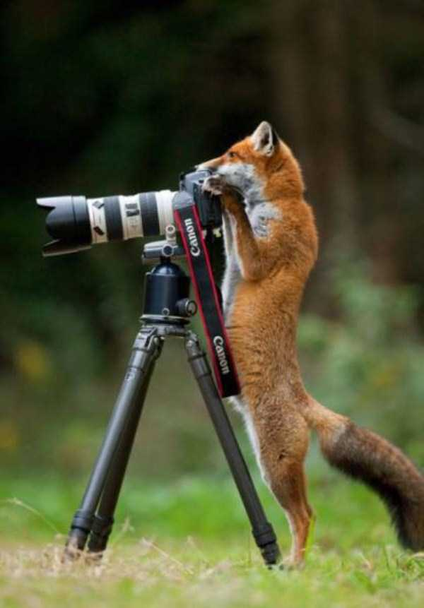 animals-photographers (9)