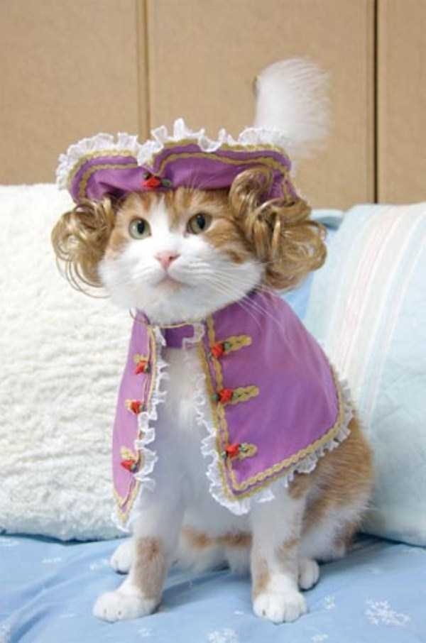 cats-in-costumes (1)