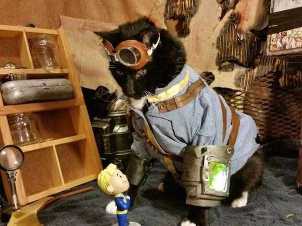 cats-in-costumes (11)