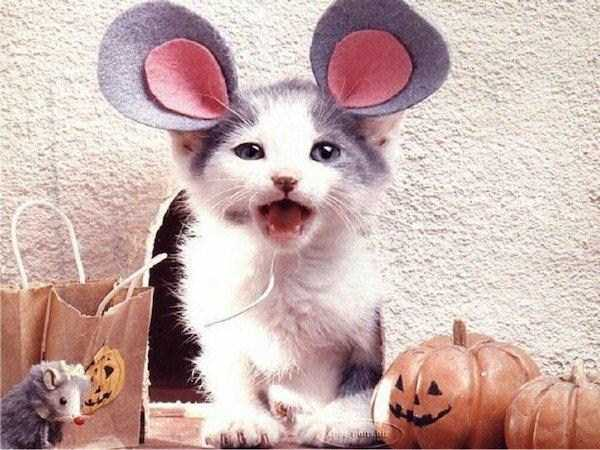 cats-in-costumes (13)