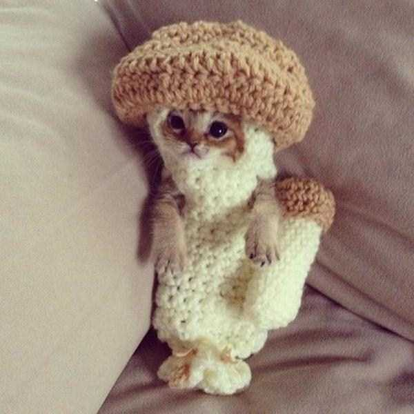 cats-in-costumes (15)