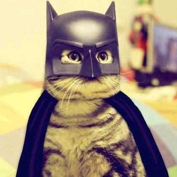cats-in-costumes (16)