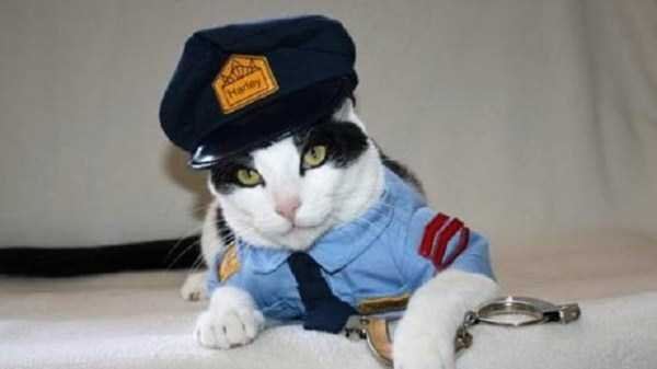 cats-in-costumes (17)