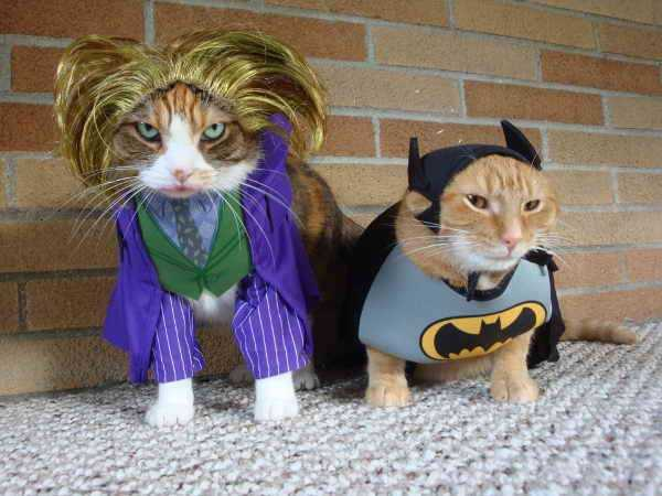 cats-in-costumes (18)