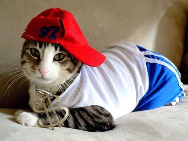 Adorable Cats in Funny Costumes (38 photos) 20