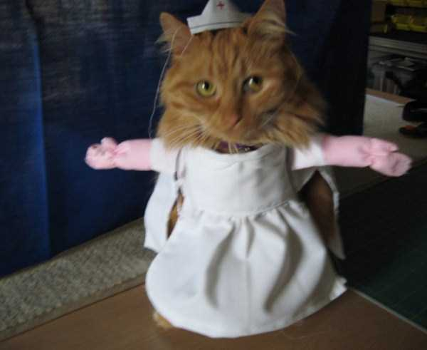 cats-in-costumes (21)