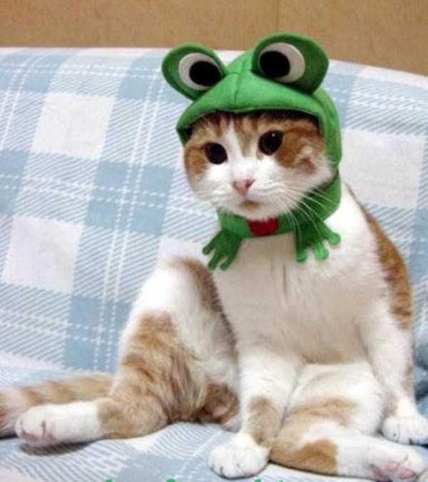 cats-in-costumes (23)