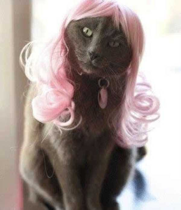 cats-in-costumes (24)