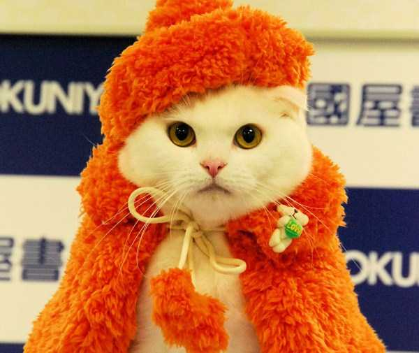 cats-in-costumes (25)