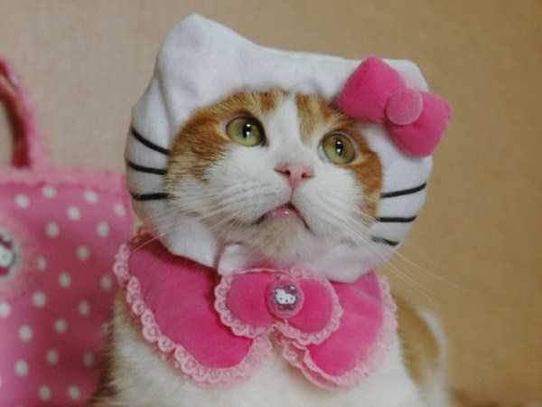 cats-in-costumes (26)