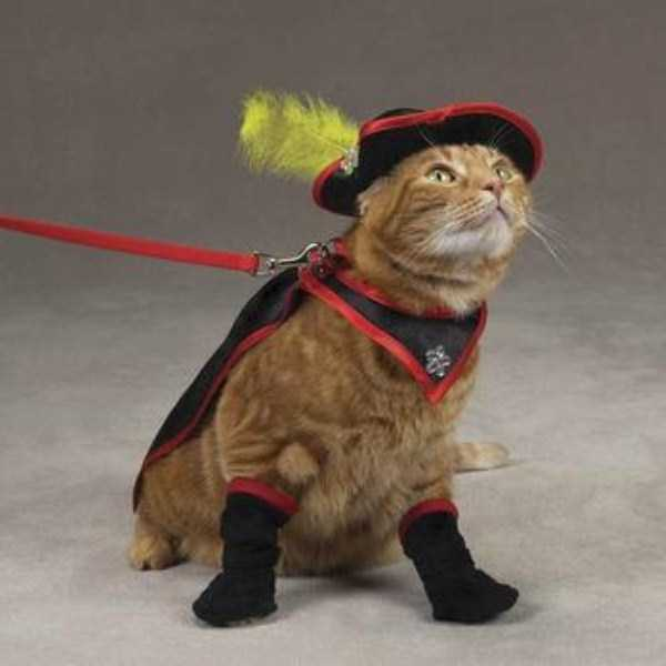 cats-in-costumes (27)