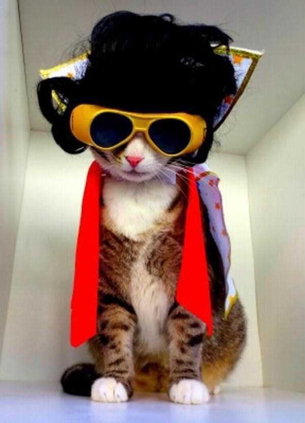 cats-in-costumes (30)