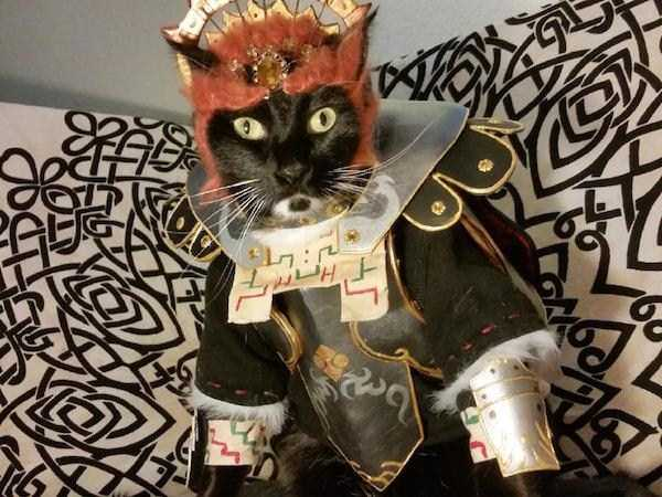 cats-in-costumes (34)