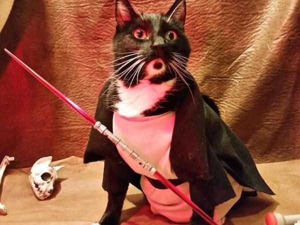 cats-in-costumes (37)