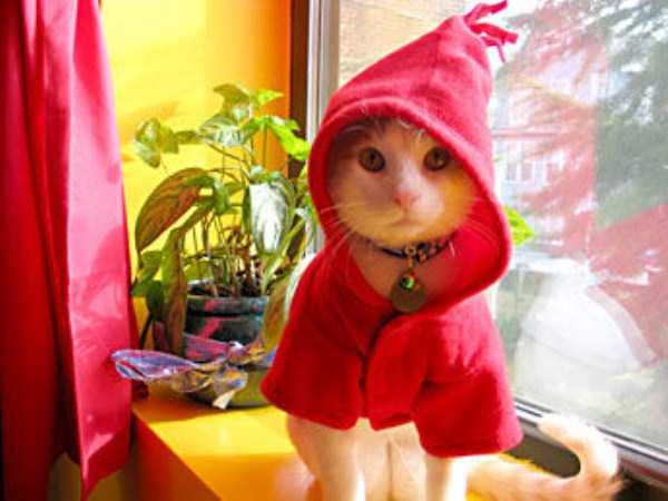 cats-in-costumes (5)