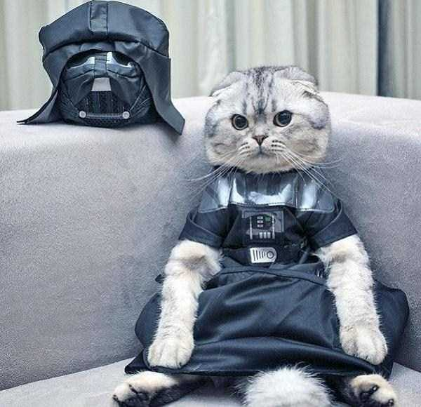 cats-in-costumes (7)