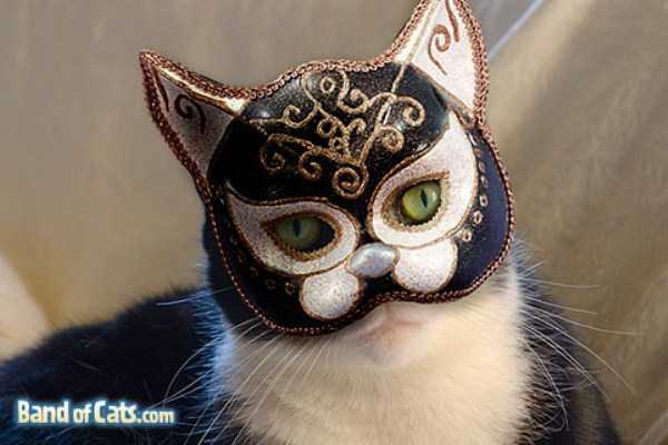 cats-in-costumes (8)