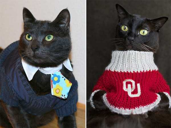 cats-in-sweaters (10)