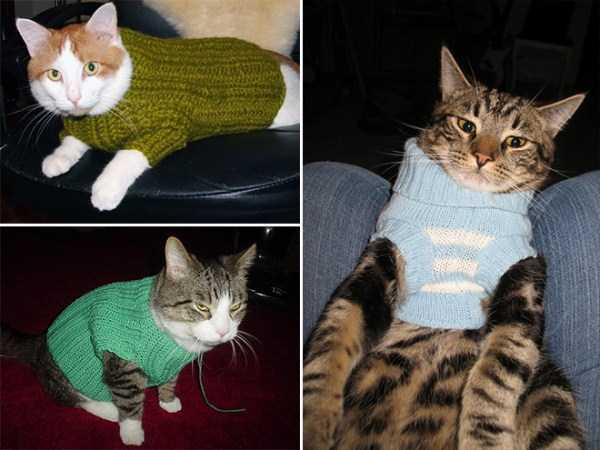 cats-in-sweaters (12)