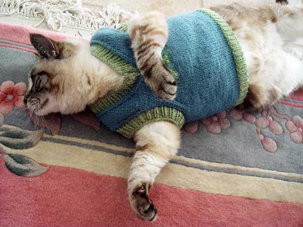 cats-in-sweaters (13)