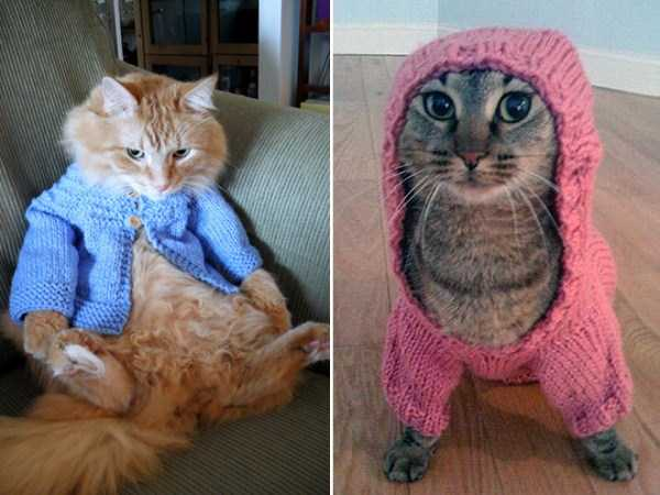 cats-in-sweaters (14)