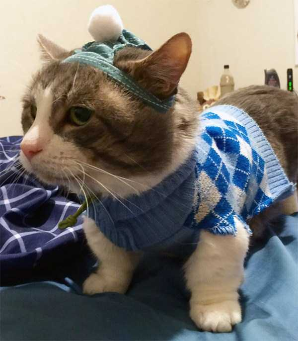 cats-in-sweaters (15)