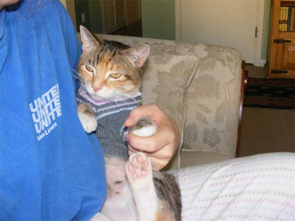 cats-in-sweaters (16)