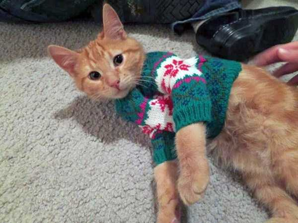 cats-in-sweaters (17)