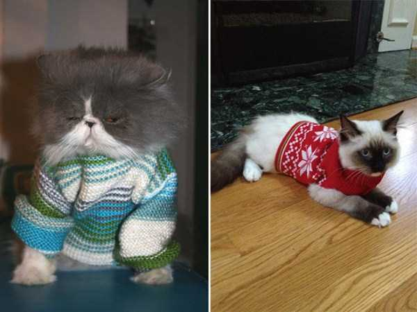 cats-in-sweaters (18)