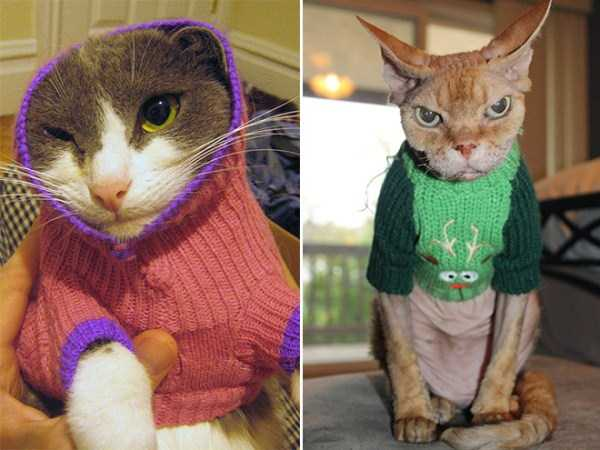 cats-in-sweaters (2)