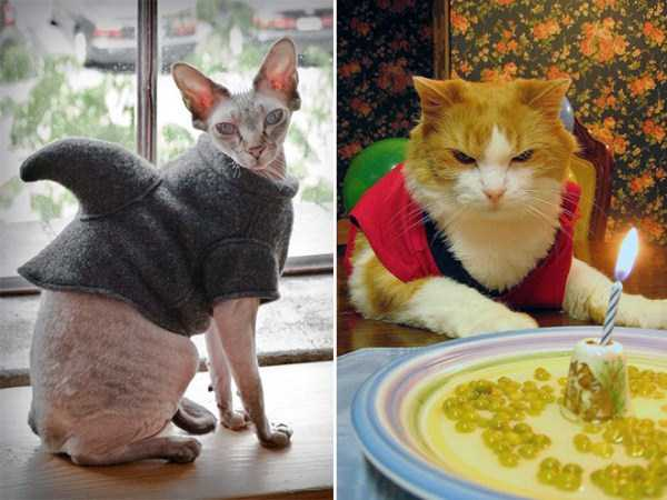 cats-in-sweaters (20)