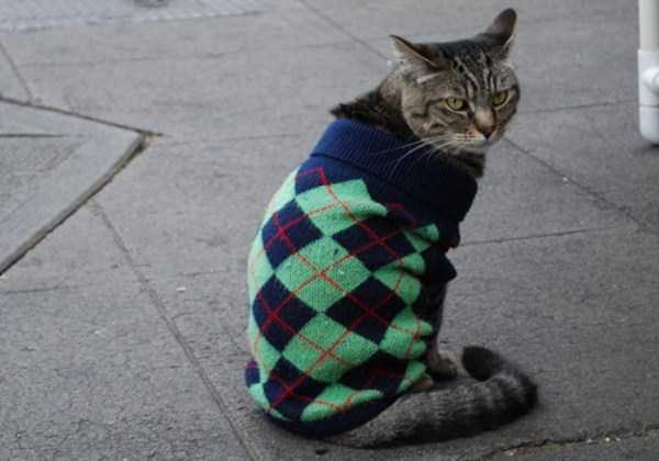 cats-in-sweaters (22)